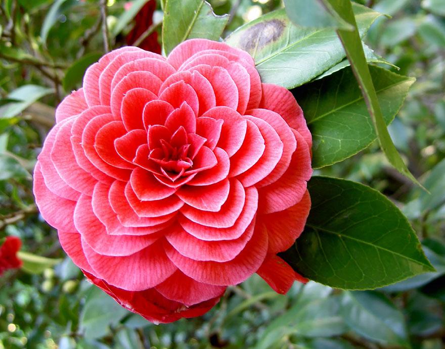 Geometrical Plants plantas geometricas Cultura Inquieta17