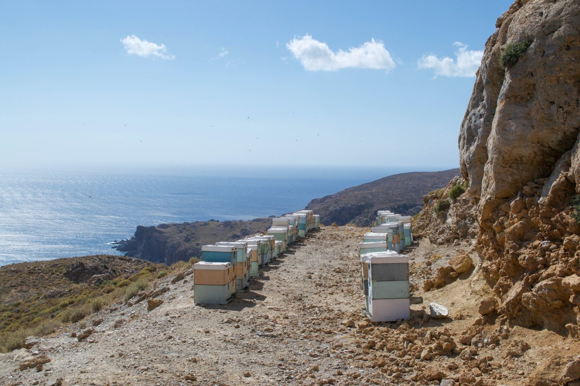 Honey Bees - Crete, Greece