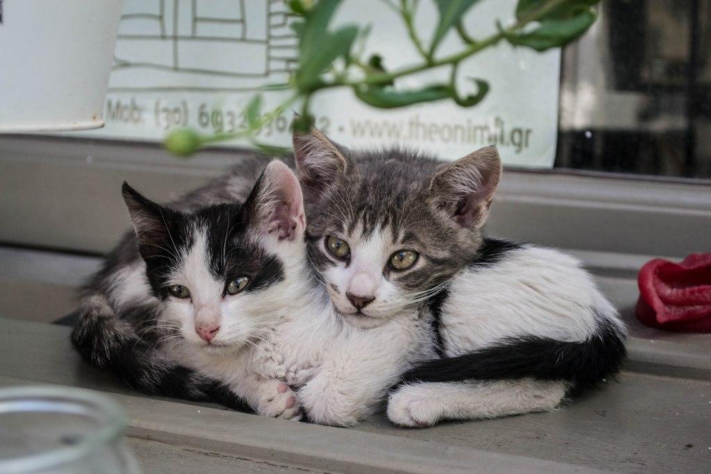 Baby Kittens - Greece