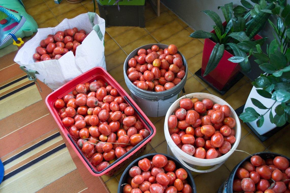 Vescovato Tomatoes, Italy