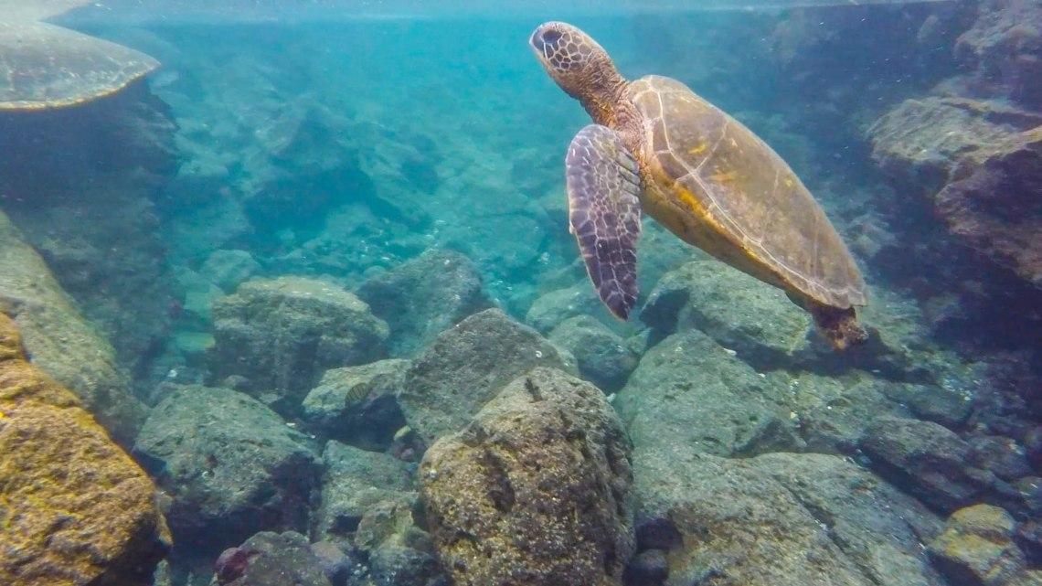 Go Pro Turtle1