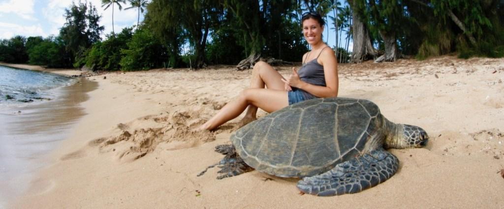 Honu, Hawaiian sea turtle, Oahu Hawaii