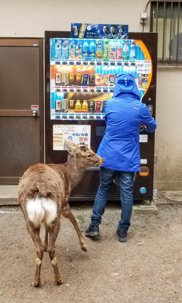 Deer at Vending Machine in Nara, Japan