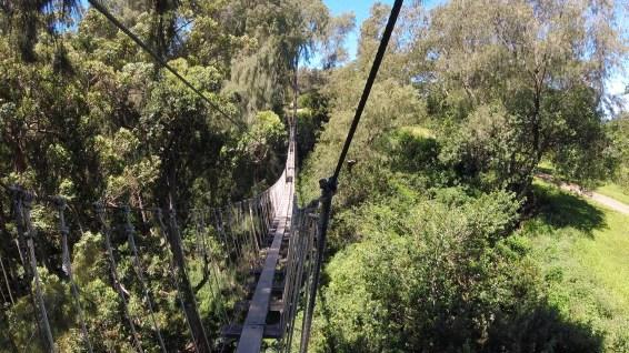 Zipline Swing Bridge