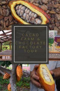 cacao farm & chocolate factory tour