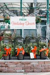 CulturallyOurs Indoor Holiday Plants Tips
