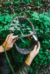 CulturallyOurs Summer Foraging Ideas From Russia