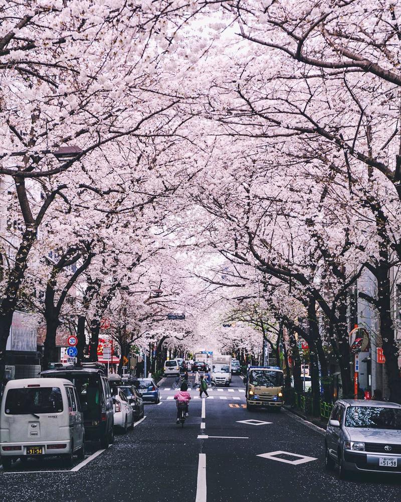 CulturallyOurs Explore Tokyo And Japan With A Local - Kayabacho Sakura