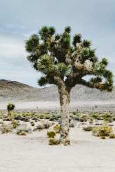 CulturallyOurs Mojave Desert National Preserve Camping Tips