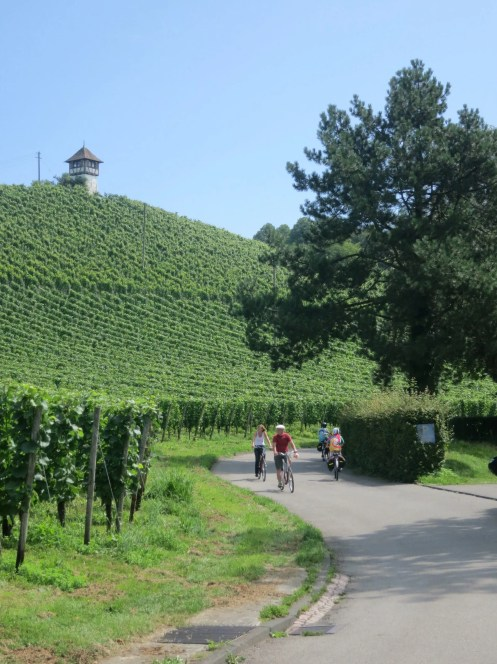 Cycling through vineyards