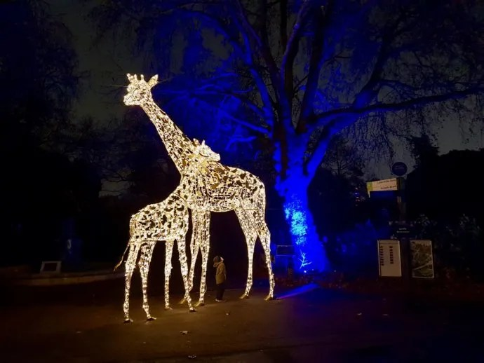 Giraffe Lights London Zoo