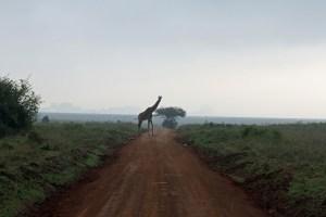 Nairobi, Kenya. Foto: Siri Wolland