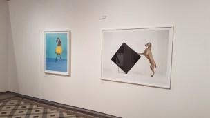 Foto William Wegman, Being Human. Les Rencontres de la Photographie, Arles 2018. Foto fra utstillingen: Siri Wolland.