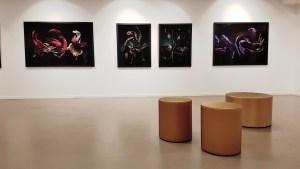 Foto fra utstillingen Villrosens siste sukk: Siri Wolland