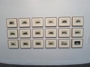 Arild Yttri, Serie av kobberstikk av løer. 2018-19. Foto fra utstillingen Siri Wolland.
