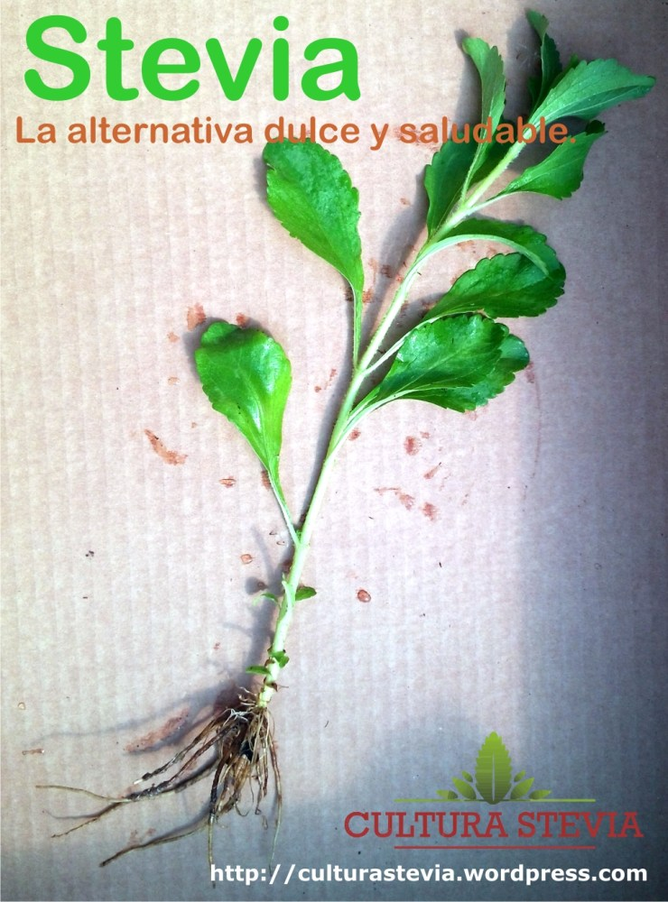 Época de Siembra - Stevia Rebaudiana Bertoni