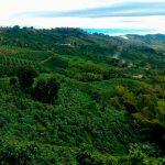 sevilla-valle-del-cauca0611