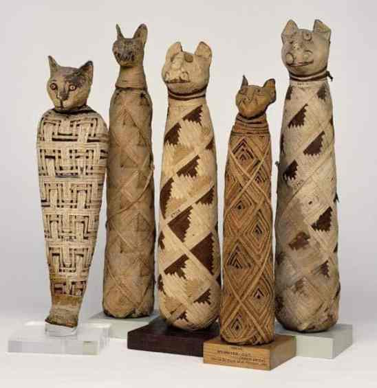 mummified-egyptian-cats