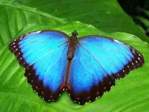 butterfly-142506_960_720