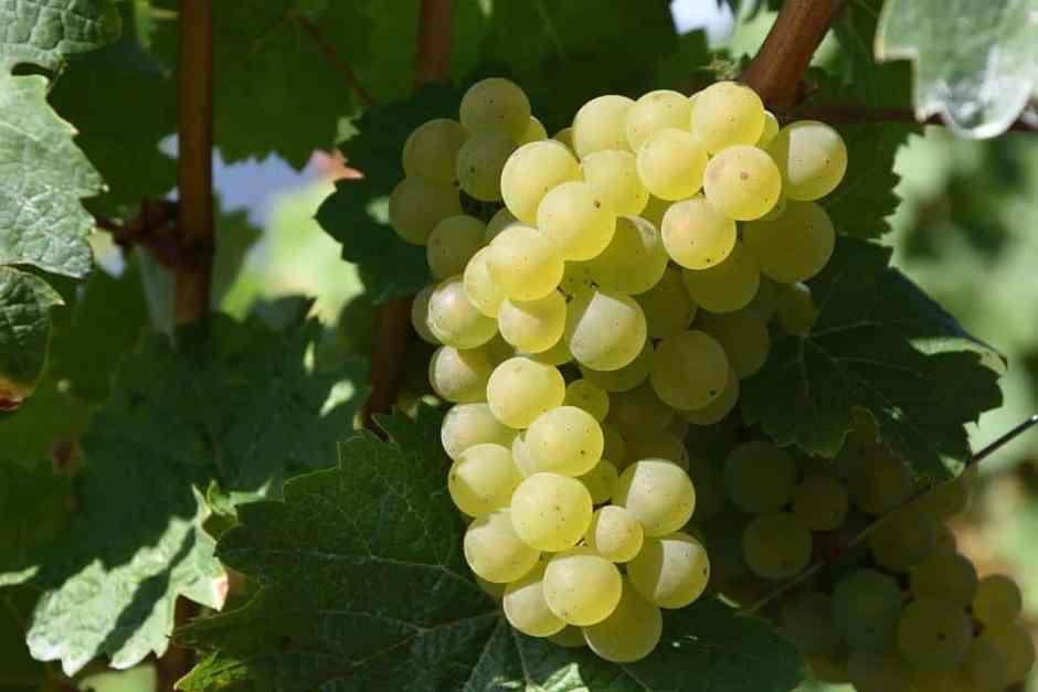 grape-1688607_960_720