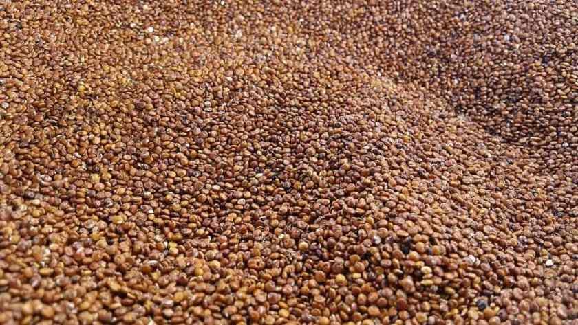 quinoa-2337621_960_720
