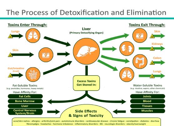 DetoxProcess.png