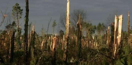 klaus-a-seme-la-desolation-dans-la-nuit-du-23-au-24-janvier-2009-au-moins-60-du-massif-forestier-landais-a-ete-detruit
