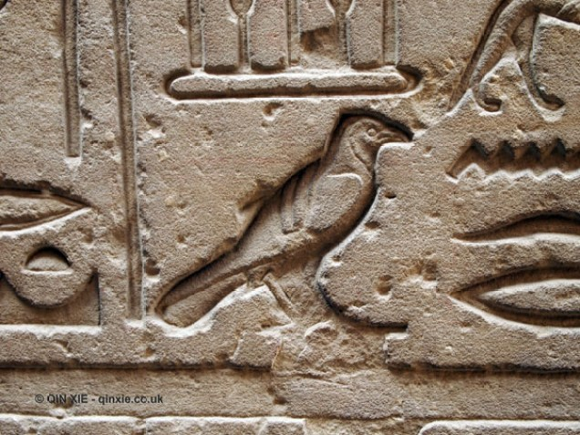Bird hieroglyph, Temple of Horus, Edfu
