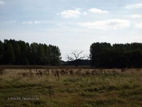 Landscape at Snape Maltings, Aldeburgh, Suffolk