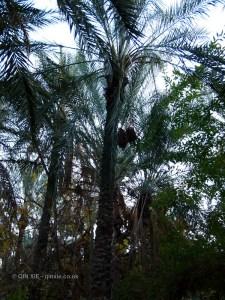 Palm trees, Tunisia