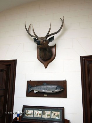Stag's head at Balfour Castle