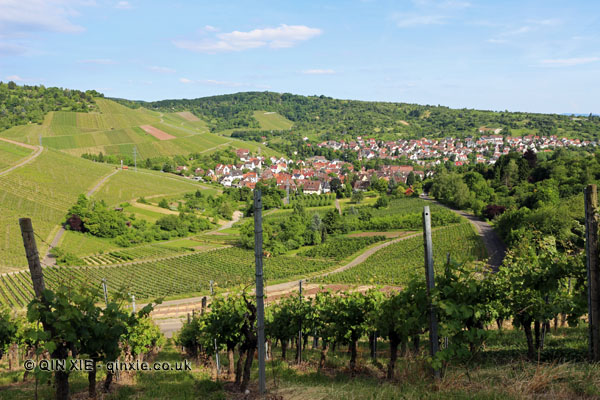 Vineyards outside Stuttgart, Wurttemberg, Germany