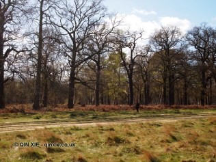Forest, Richmond Park
