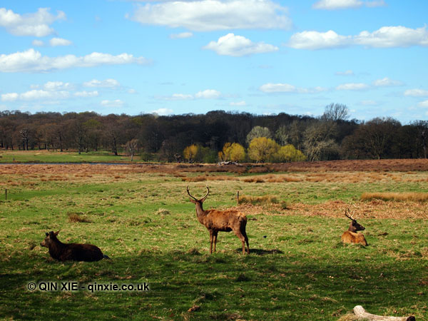 Spring in Richmond Park