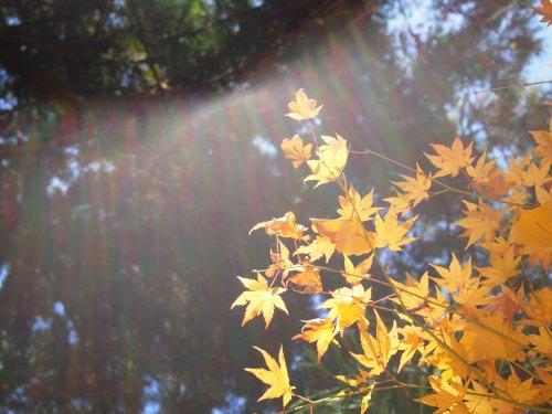 PC030280 12月新しいカメラを持って紅葉を撮りに京都府立植物園へ(2012年)
