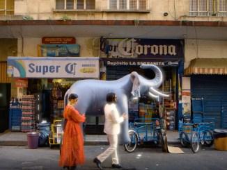 In The Valley Below Elephant video still