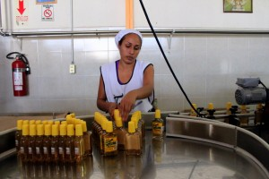 Woman working in tequila factory assembly line, Tonaya, Jalisco.