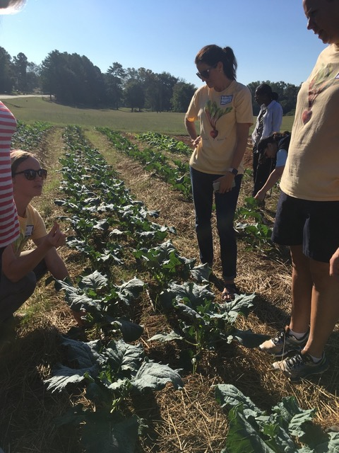 Grow It Know It staff and Barrow County, GA, teachers discussing pest management at Wimberly's Roots Farm.
