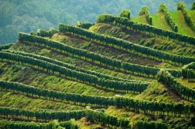 Vignes d'Irouleguy © Eyesea Production