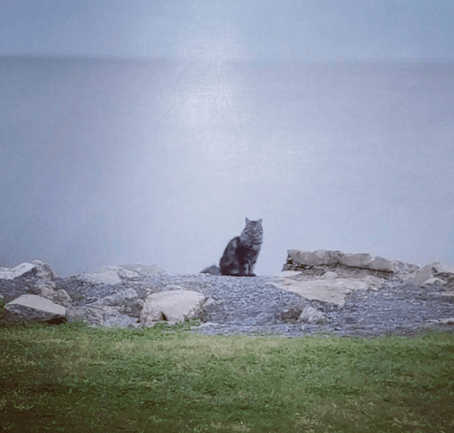 cat on lake pontchartrain