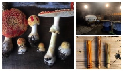 Cover photos for the second part of Fermentation Journeys, Mushrooms, Chocolate and Hyphae
