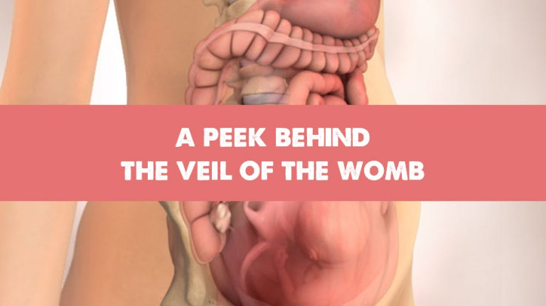 A Peek Behind the Veil of the Womb