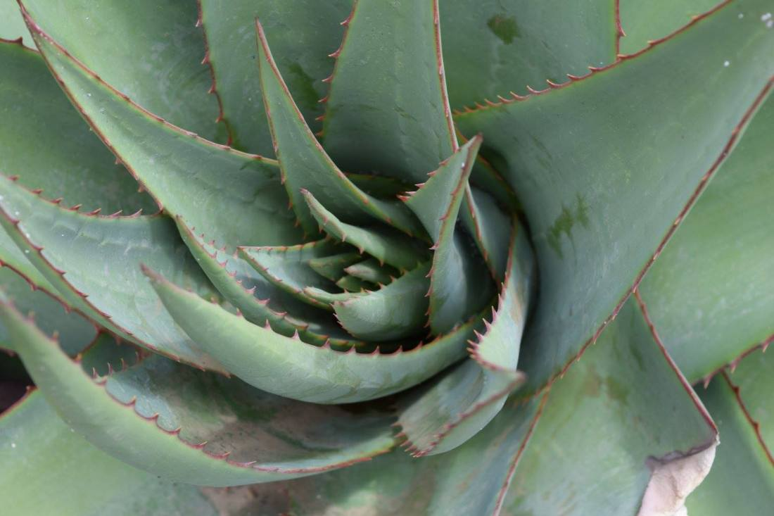 close up of a green cactus