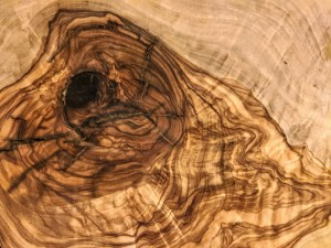 Cross section of a tree showing irregular rings
