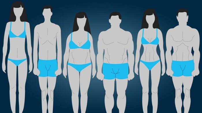Типы телосложения человека