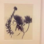Grande herbario de sombras, Sombra de Echium, 1972.