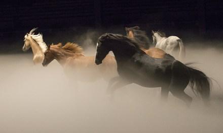 Just Horse Play?: 'Ex Anima' by Théâtre Équestre Zingaro
