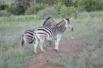 On the safari