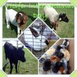 Heifer Day -10-20-13