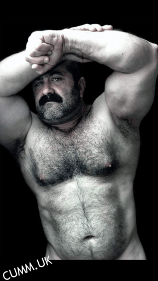 bisexual daddy bear